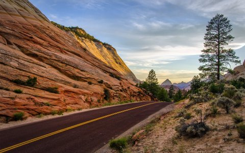 leaving-zion-national-park-utah-summer-rock-road-tree-mountain