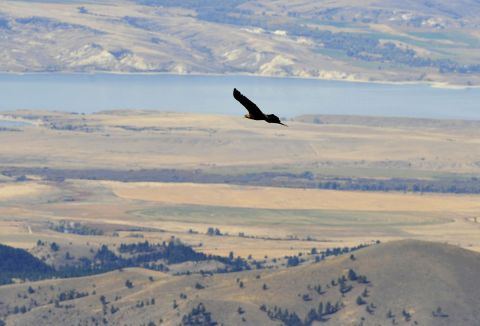 Eagle Montana