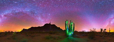 arizona-christmas-at-organ-pipe-cactus-nm-ala