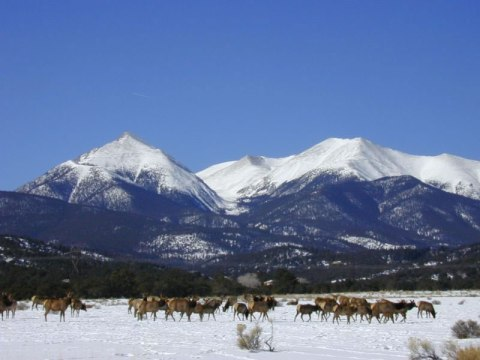 wild-elk-and-mountains