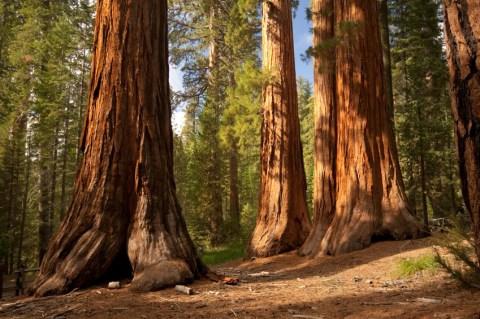 HIKE-Sequoia-Cover-photo-big-trees