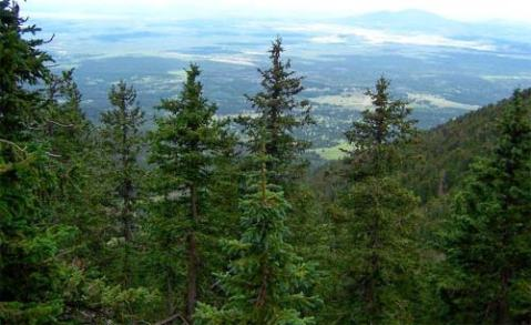 View of Flagstaff From Humphreys Peak Trail