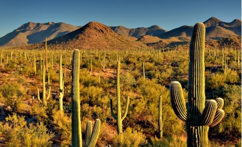 Welcome-to-Saguaro-National-Park